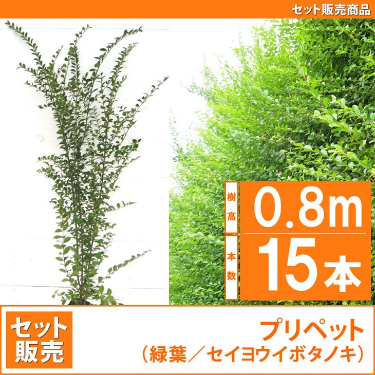 人気の生垣 プリペット 苗 樹木 植木